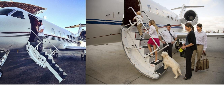 перелет с домашним животным частным самолетом